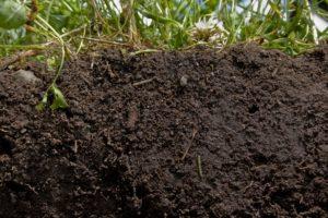 Topsoil Supplier in Basildon